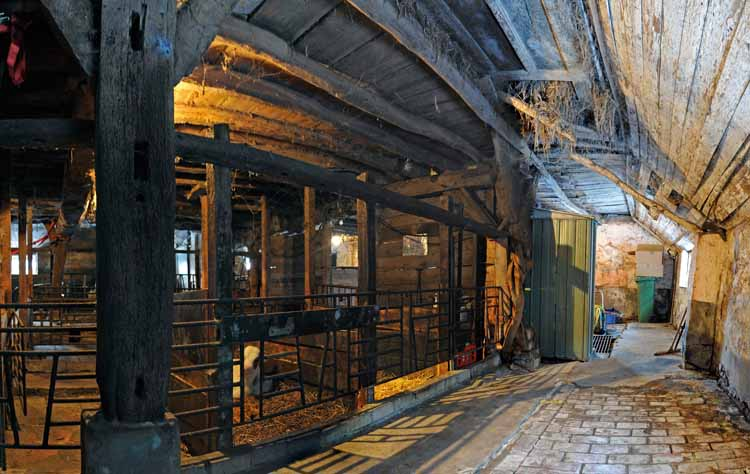 Het interieur van de stal van de Armenhoef bij Best in 2010, vóór de restauratie. De dragende balkenconstructie dateert uit 1263. foto Michiel Wasmus (uit ''t Goed te Arle')