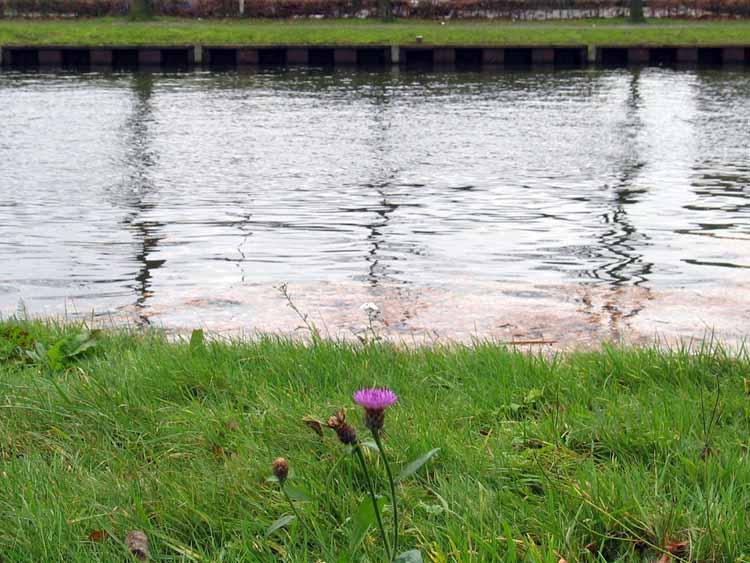 Pluriform landschap langs het Wilhelminakanaal, Tilburg. foto Merijn Hermsen