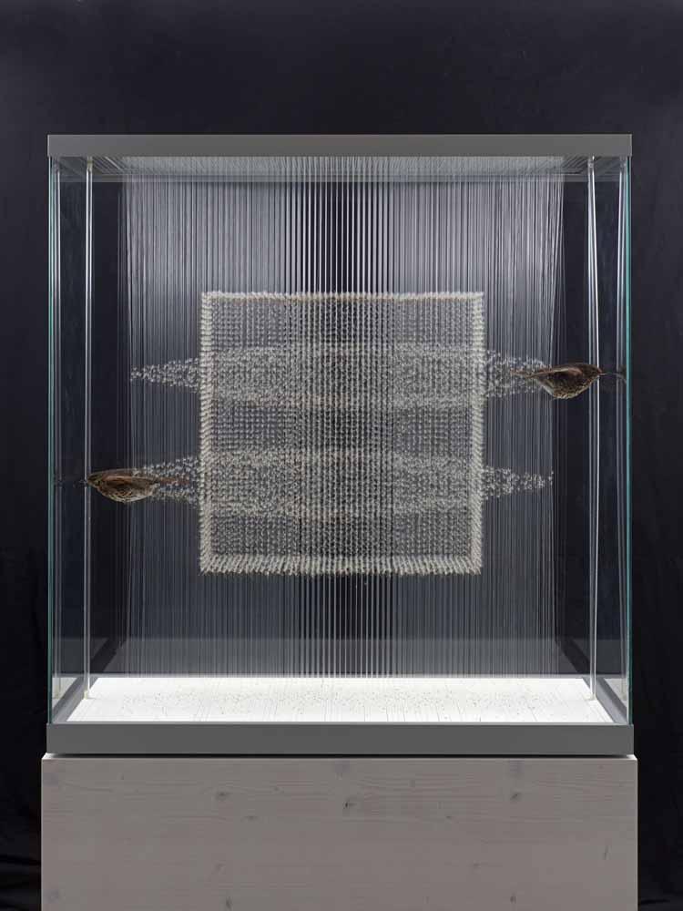 2014, Paardenbloemzaden, twee lijsters (taxidermie), nylon, vitrinekast 107,50 x 101,60 x 41,70 cm, Renschdael art foundation