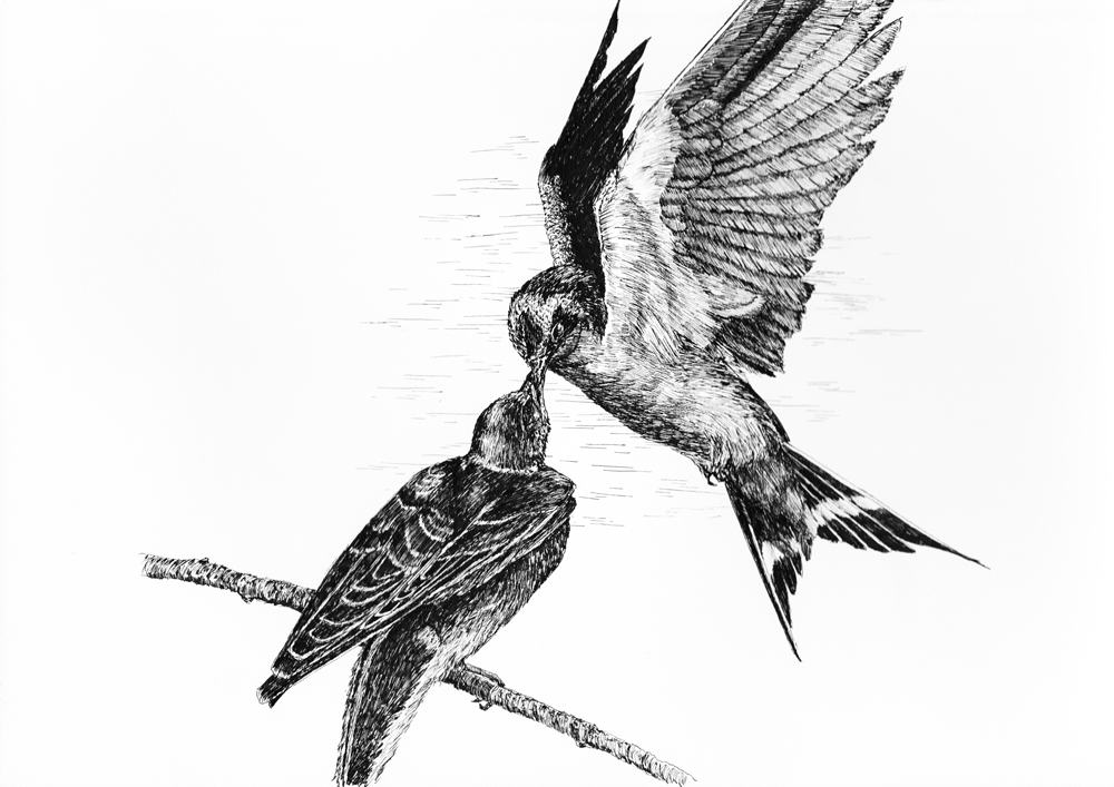 Vogels En Verzen In Fraaie Bundel Van Bas Geeraets Brabant